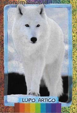 Amici Cucciolotti 2016: Fronte Figurina n. 30 Lupo Artico