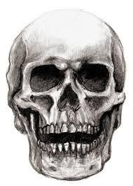 normal skull