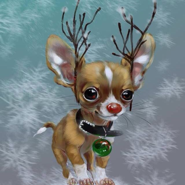 Reindeer chi getting into the spirit :)