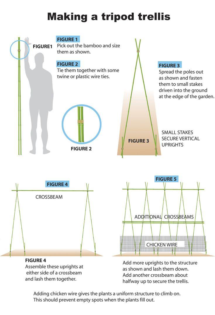 Tripod Bamboo Trellis For Pole Beans Summer Garden 640 x 480
