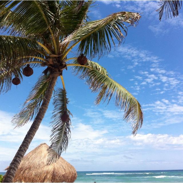 Breezy palm.