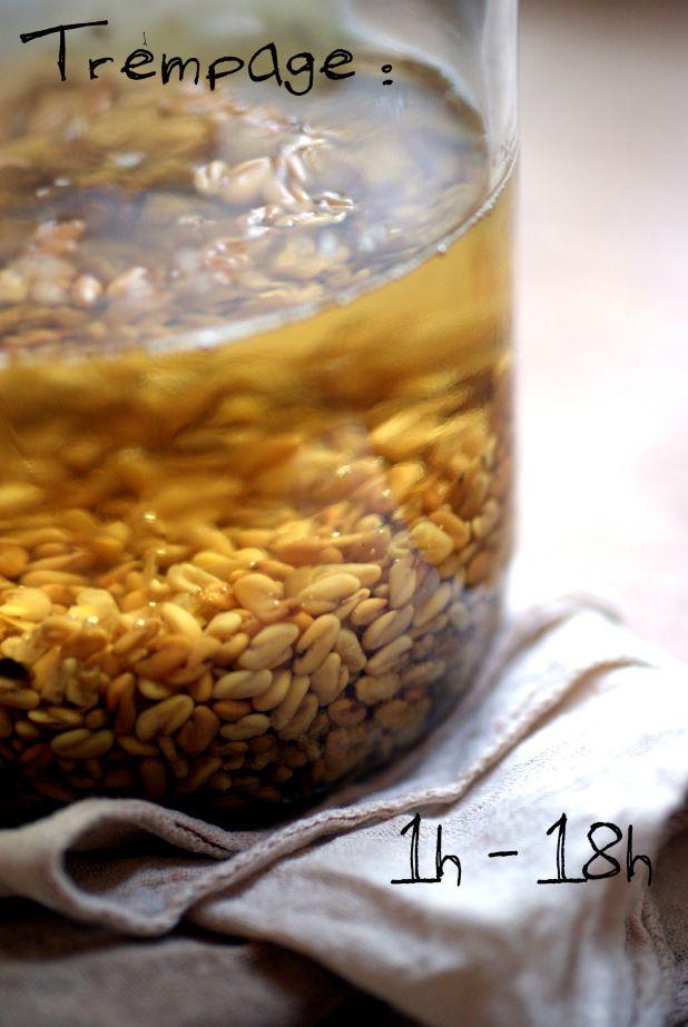 le b.a ba des graines germées | Antigone XXI