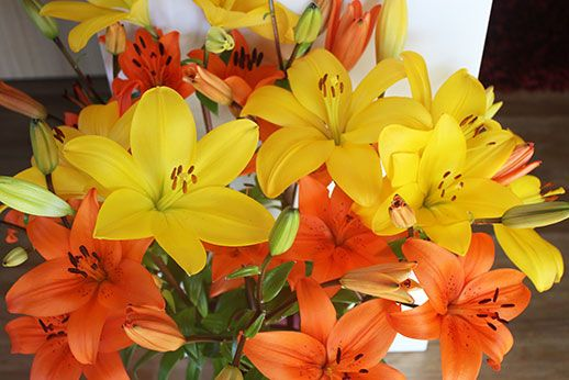 Mixed bright bunch from Liliesinatube online flower shop, delivered Australia-wide