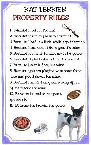 RAT TERRIER PROPERTY RULES Magnet. $4.79, via Etsy.  This applies to Miniature Pinschers too.