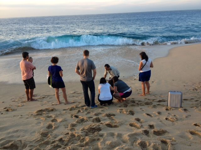 Baby sea turtle release at Grand Solmar Land's End Resort & Spa in Cabo San Lucas.
