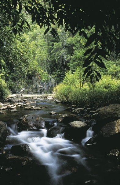 KONDALILLA NATIONAL PARK | SUNSHINE COAST HINTERLAND | QUEENSLAND | AUSTRALIA