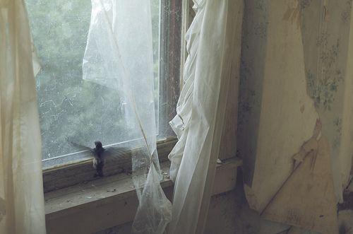 Bird,Vintage,House,Room,Window,Old