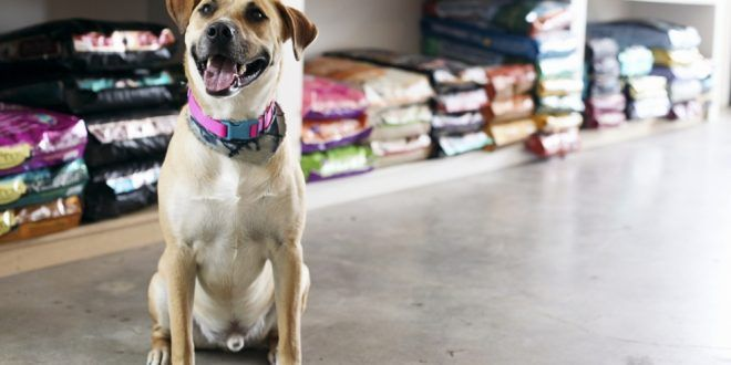 All you should know about Limited Ingredient Dog Food - Pets Finator