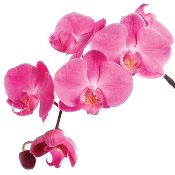 'Orchids not only add a modern statement to any indoor space, but come in a wide range of vibrant colours like purple, pink and yellow. It's no surprise Pantone named 'Radiant Orchid' the colour of 2014.