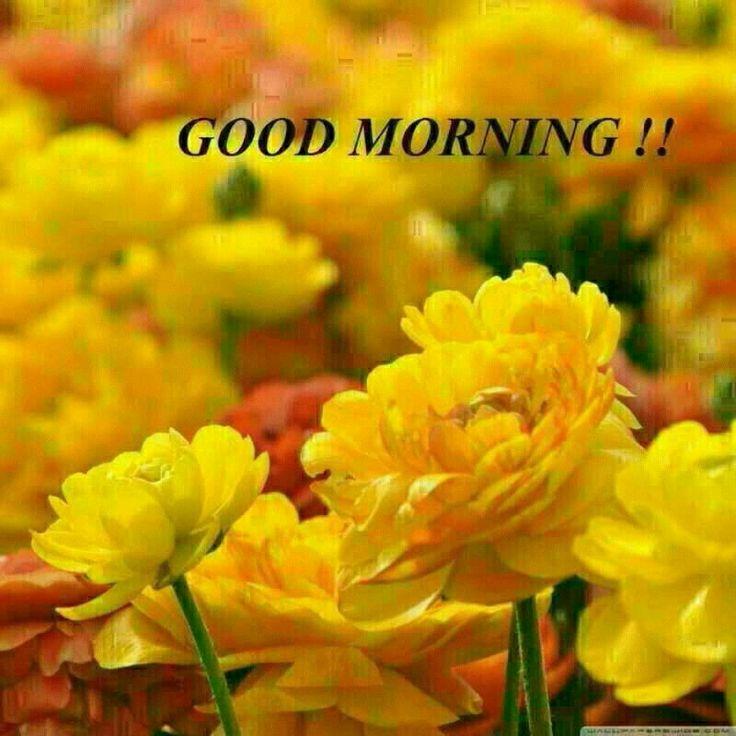 Fresh Good Morning Yellow Flower Images