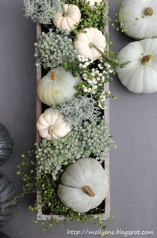 White pumpkins + succulents