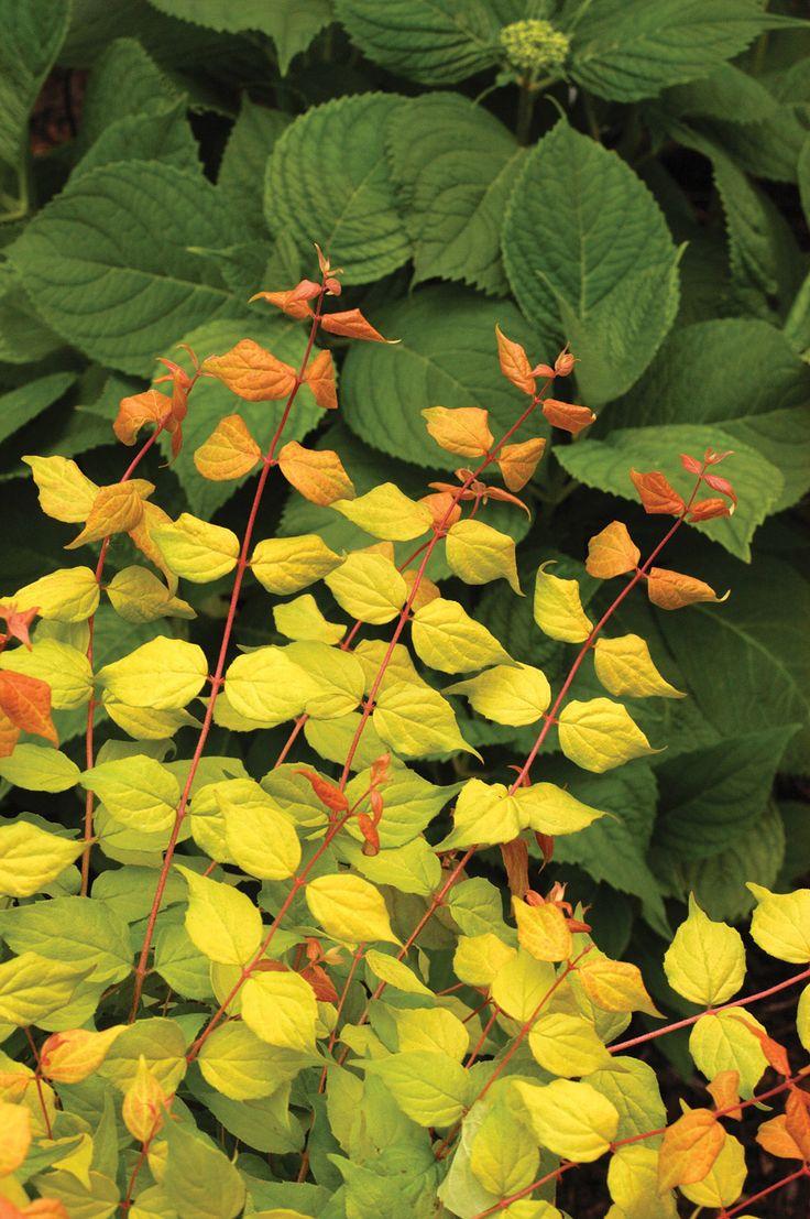 Flower Garden Ideas Wisconsin 23 best new landscaping plants images on pinterest | landscaping