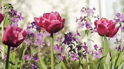 Měsíčnice ozdobí zahradu od jara do zimy