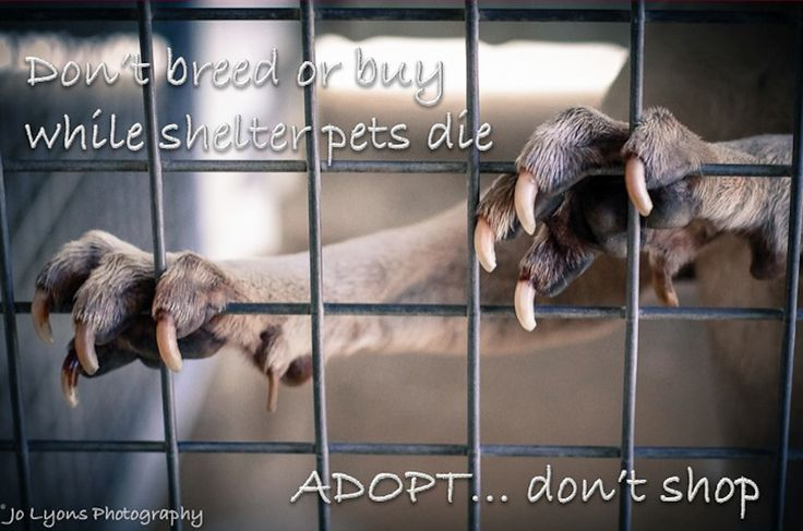 Don't breed or buy while shelter pets die.  Adopt... don't shop  © Jo Lyons Photography