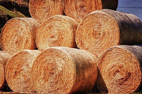 Hay There - Joan Carroll   #hay #bales