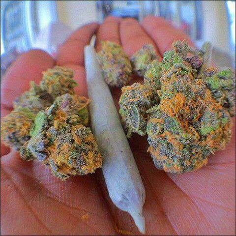 #medical #marijuana  http://www.spliffseeds.nl/autoflowering-seeds/ak-automatic-female-seeds.html