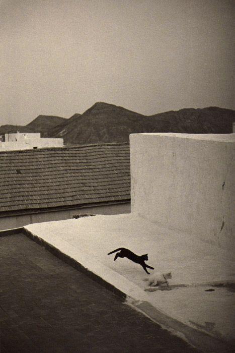Bernard Plossu. Almería, Cabo de Gata   black and white cat