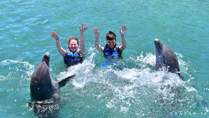 Delfíni - Zaplavte si s delfíny v Karibiku - ROATAN.cz
