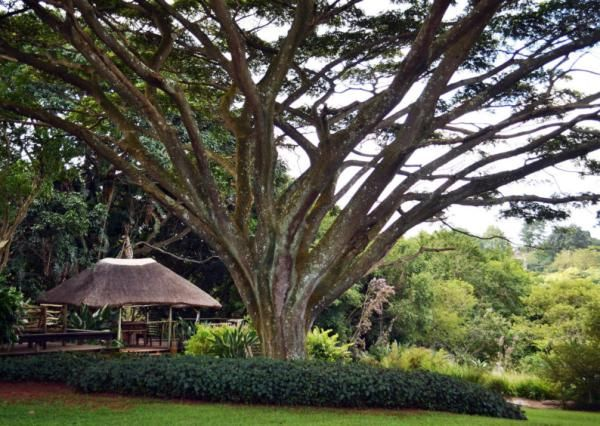 See some open conservation gardens - IOL Lifestyle | IOL.co.za