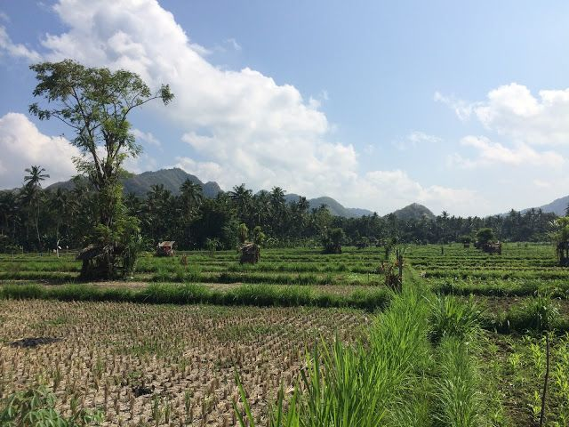 Jules Balland: Viagem de carro pela costa leste de Bali - Dia 2 N...