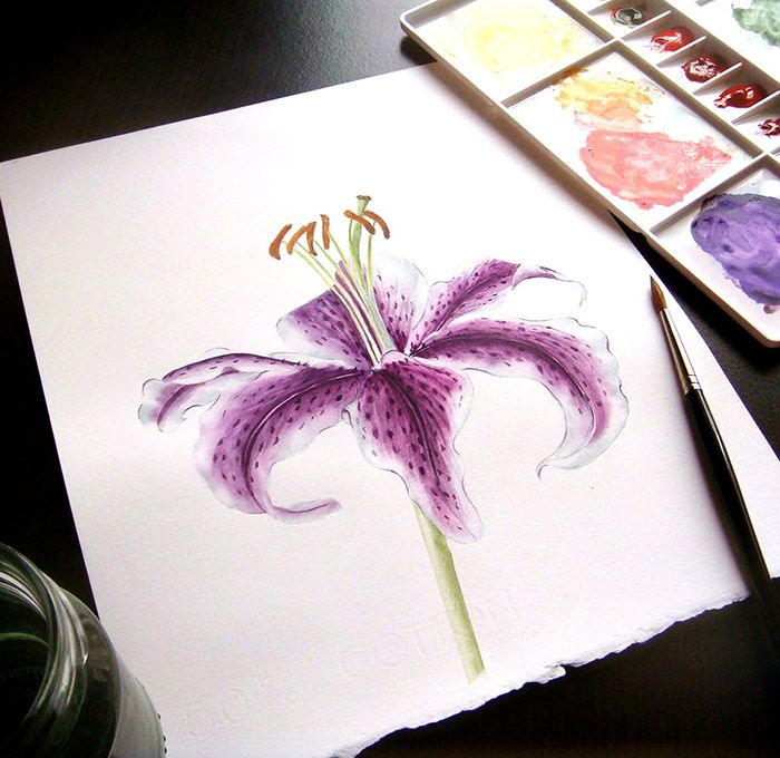 Lilium by Alina Draguceanu.  Watercolour on paper. Crin imperial. Acuarelă.