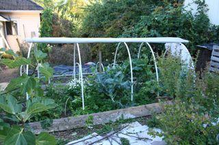 Planting a winter garden