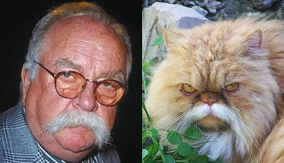 Wilfred Brimley & Cat   Celebrity and their animal look alikes #celebritydoppelgangers