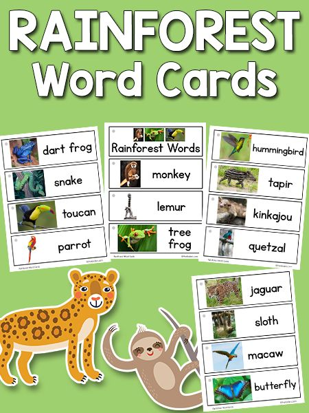 These Rainforest Picture-Word Cards include 15 printable cards with rainforest/jungle animals: monkey, tree frog, lemur, poison dart frog, snake, toucan, parrot, hummingbird, tapir, kinkajou, quetzal, jaguar, macaw, blue morpho butterfly, sloth. There are many more sets on the Picture Word Cards page. These cards go with my Rainforest Theme Unit. How to use the word cards: There are a few ways you can use these picture-word cards and display them. Use these