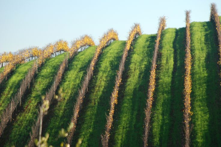 The Stellenbosch winelands