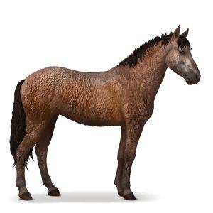 rijpaard curly bruin
