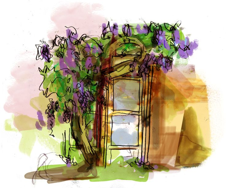 Paining of our glorious wisteria - univ.ox.ac.uk