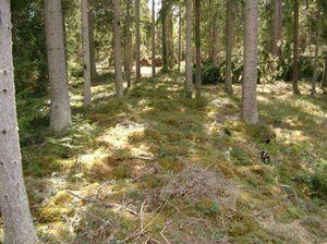 Hägnad, Stensträng och Stenmur   Skoghistoria