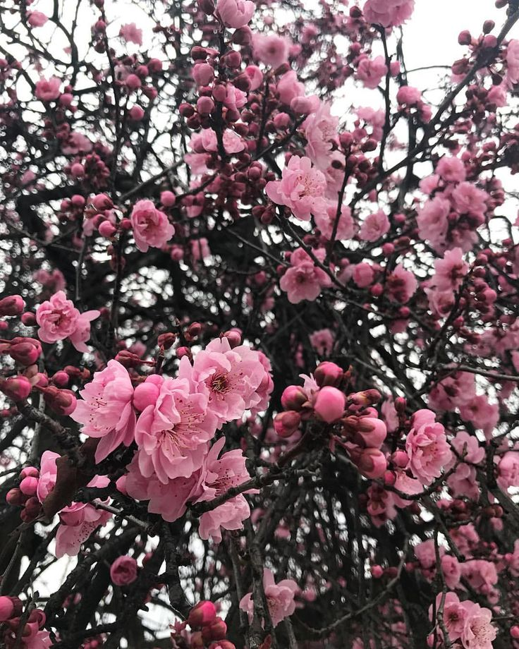 """Blossom 🌸- Wild Magnolia 