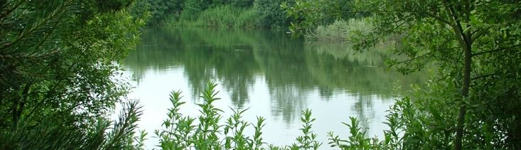 Cowlands Farm - Cowlands farm is a mature 5 acre fishery situated near Braintree, Essex. The venue provides the members of the syndicate numerous angling opportunitie... Check more at http://carpfishinglakes.com/item/cowlands-farm/