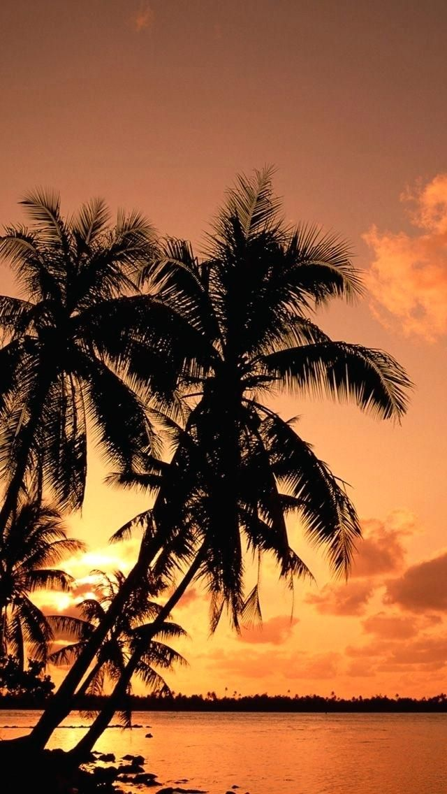 Nature Iphone Wallpaper Palm Trees Wallpaper Palm Tree Sunset Palm Tree Iphone Wallpaper
