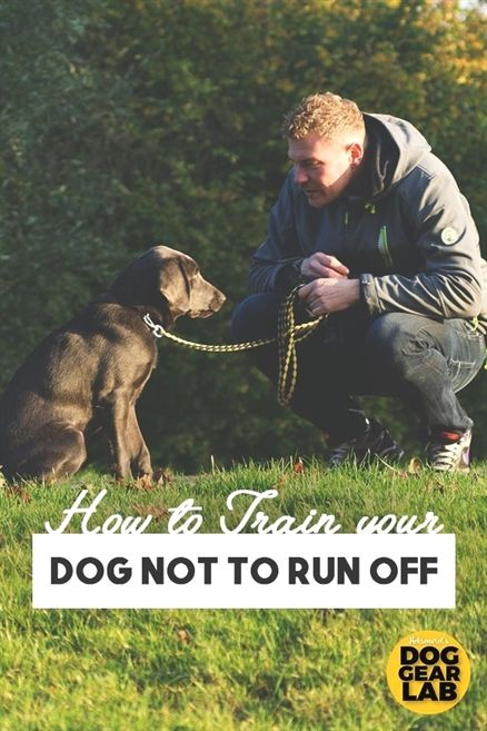 Your Dog Should Be Able To Respond To Your Commands Dog Training Obedience Dog Training Tips Training Your Dog