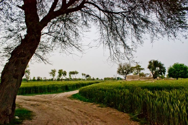 Árvore à beira da estrada na zona rural da província do Punjab, no Paquistão.