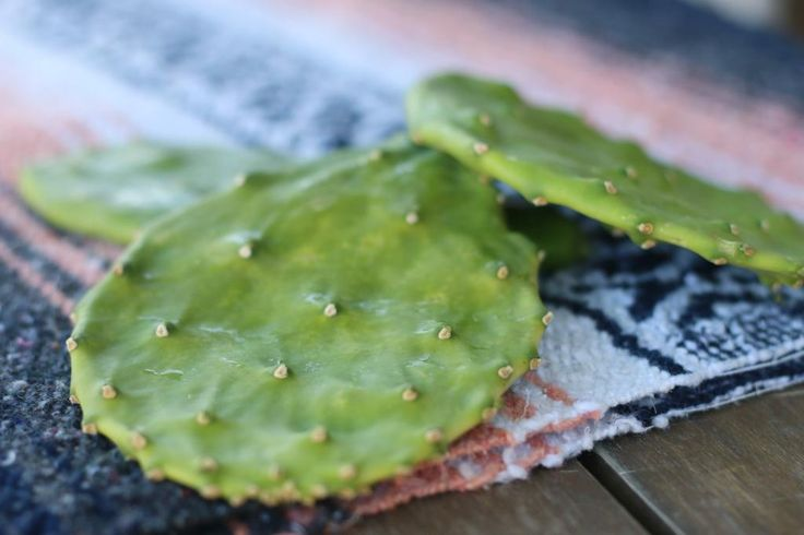 The Health Benefits of Cactus Leaf  - Low Carb Belly Busting Cactus Smoothie... helps ease hangovers, fights cancer cells, helps with digestive issues, curbs hunger and best of all... cactus aids in weight loss.