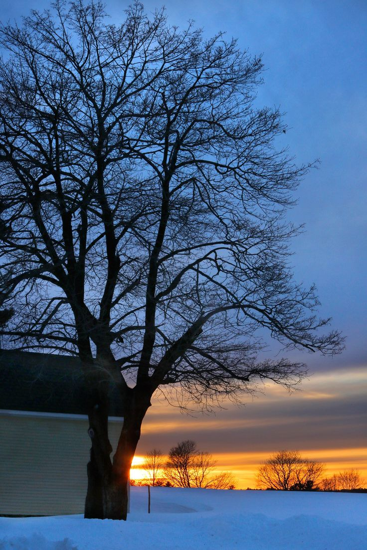A setting sun colors the sky near the horizon as dusk colors the sky behind a tree at Laudholm Farm in Wells. Laudholm aims to become the first nonprofit in Maine to derive all of its electricity needs from solar power. Gregory Rec/Staff Photographer