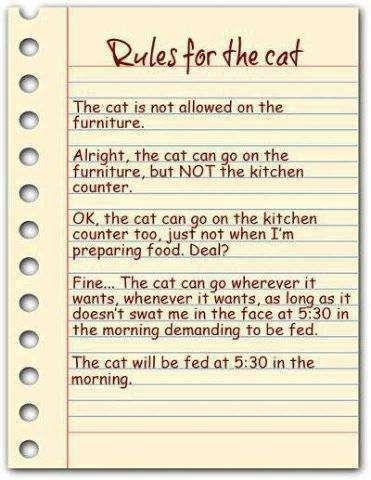A Cat's Rules
