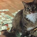 CASHnip is a #hustler who gives all his earnings to a local homeless shelter!  #WorkingCat