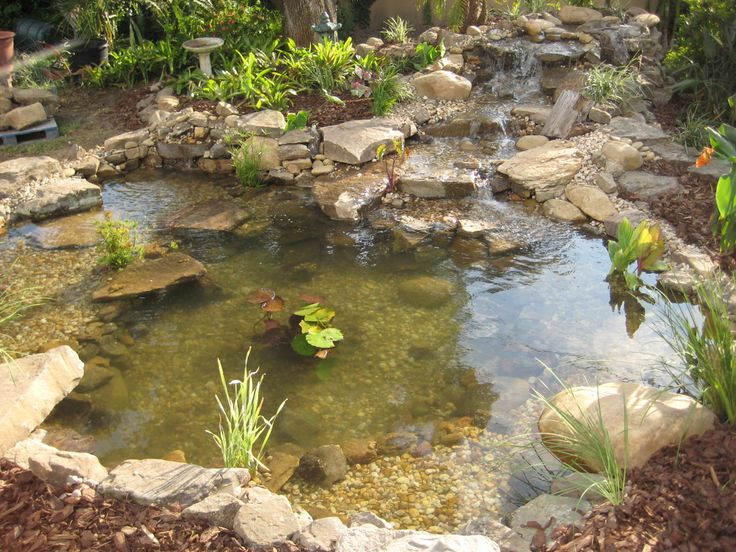 17 best images about gardening landscaping on pinterest for Garden pond ecosystem