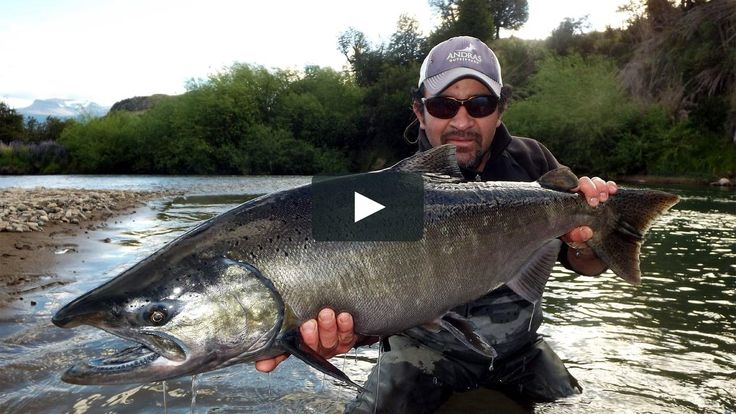 www.lavaguada.cl: El Retorno del Rey - King Salmon in Patagonia Chile. We share with you one of our Chinook salmon fishing videos in the waters of Coyhaique, Patagonia, Chile. The fishing is done with equipment of fly of one and two hands, rod spey. The best dates for catching silver fish, fresh from the sea, is from November to January each year. If you want to experience this fishing in the best rivers of Aysén, just write to our email contacto@lavaguada.cl. Limited quotas for next season…