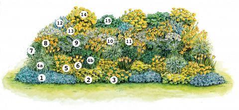 Pflanzvorschlag für ein sonnengelbes Beet