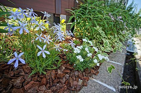 乾いた日陰を好むのはニューサイラン、ハナアロエ、チオノドクサ、オーニソガラム、ゼフィランサスなどの植物です。
