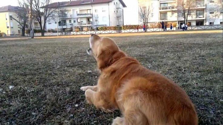 Cane che abbaia troppo