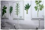 Kitchen hangers with herbs
