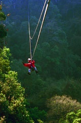 Karkloof Canopy Tours, PMB, SA. I want to do this one day and scream like mad on the way down :)