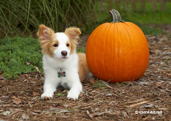 Best Grain Free Puppy Food For Rough Collie