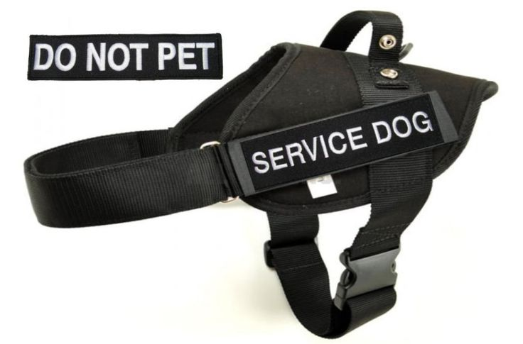 Police and Service Dog BLACK Vest Harness with 1 of each Embroidered badges 'SERVICE DOG' and 'DO NOT PET' - Redline K9 ** You can get additional details at the image link. (This is an affiliate link and I receive a commission for the sales)